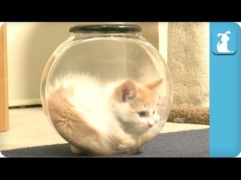 Kitten Can't Get Out of Fishbowl ...