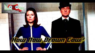 Royalty Free :How Now Brown Cow