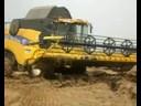 Пшеница: