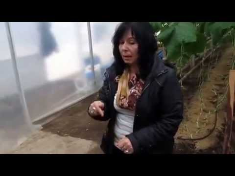 Байкал ЕМ1 - Отглеждане на краставици
