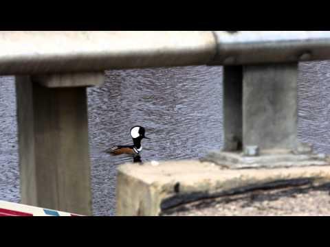 Wisconsin Bird Identification