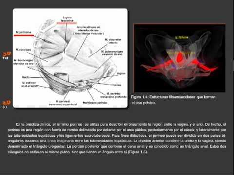Visualización y Presentación de Anatomía Aplicada a Cirugía de Piso Pélvico
