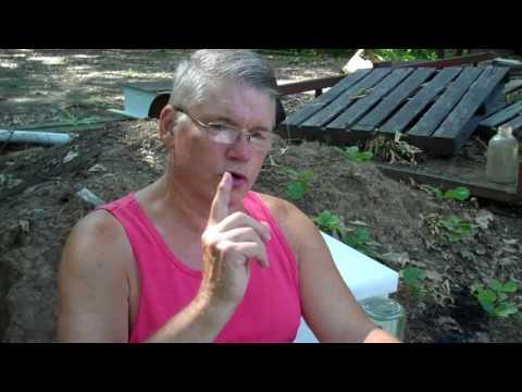 Beekeepers' 8 Mistakes