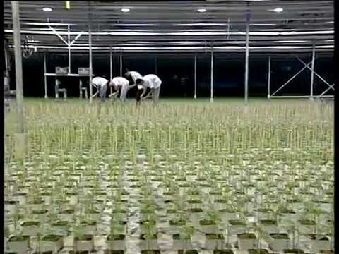 The DKG Group presents GRODAN hydroponics (Υδροπονία)