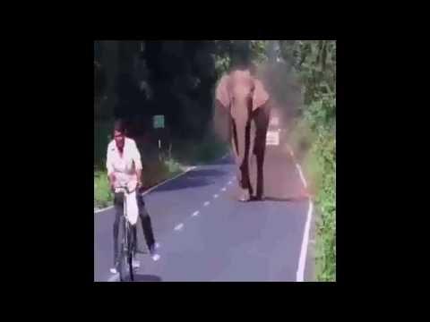 سكرنا الشارع .. والجدع يعدي ,, Elephant