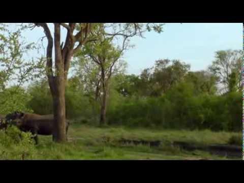 Дикая Южная Африка. Сафари / Wildlife South Africa: Safar (Doku)