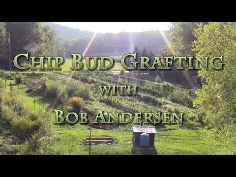Chip Bud Grafting with Bob Andersen