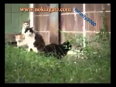 فيديو فار شجاع يهاجم قطط