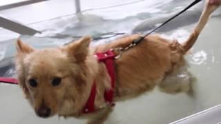T02E06: Fisioterapia e Acupuntura para os Pets