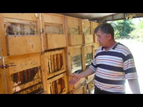 Пчеловодство в чеченской республике