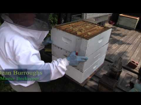 Delmarva Gardens: Harvesting Honey with Master Beekeeper Dean Burroughs