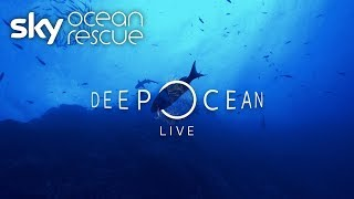 Deep Ocean Live: What you missed - SKYNEWS