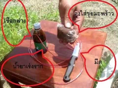 การตอนกิ่งต้นมะนาว.wmv