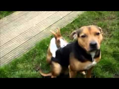FUNNY   a Rabbit Shagging a Dog in the Garden 2014