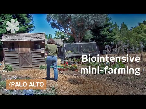 Biointensive mini-farming: grow more food in less space
