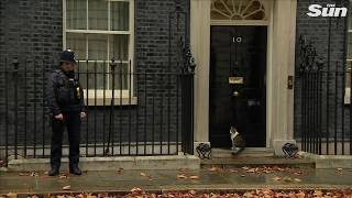 Hilarious moment Downing Street policeman knocks on Number 10 to let Larry cat in - THESUNNEWSPAPER