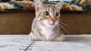 Este gato sabe como ver una película de terror.