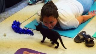 Foster kittens look for fur-ever homes at yoga class - WASHINGTONPOST