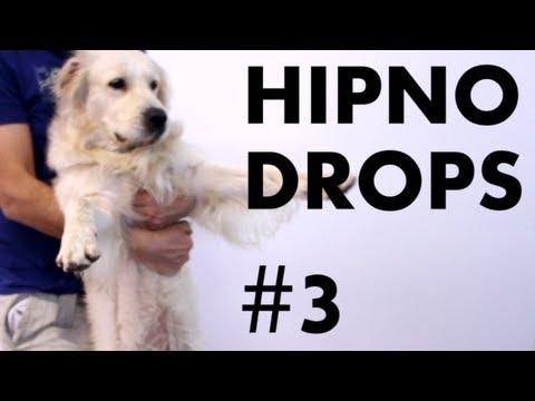 HipnoDrops #3 - Pelado e falando chinês.