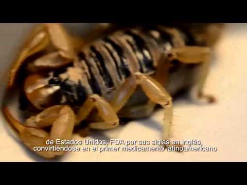 Cápsula animales venenosos