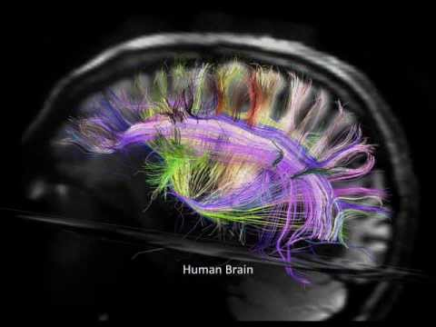 New Discoveries in Brain Structure and Connectivity