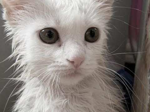 Wet Cats in Pics Part 2 | Cats in Pics