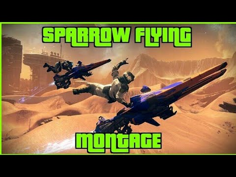 Sparrow Flying Montage