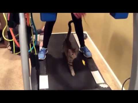Cute Kitten Running on Treadmill!!!