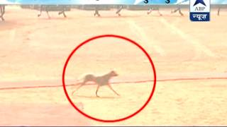 Security Violation: A mongrel spotted at Rashtrapati Bhavan during Guard of Honour - ABPNEWSTV
