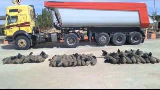 فيديو.. «شعار السيسي» بمضبوطات الجيش على الحدود مع ليبيا | المصري اليوم