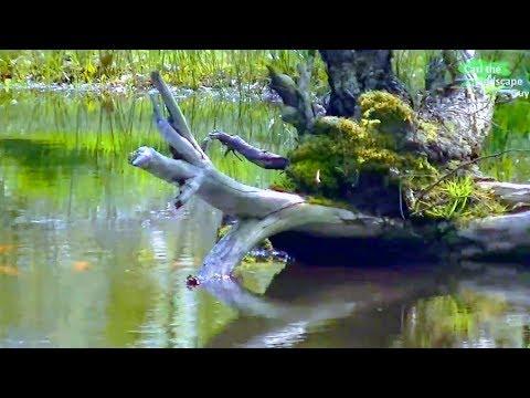 Related video for Fische naturteich