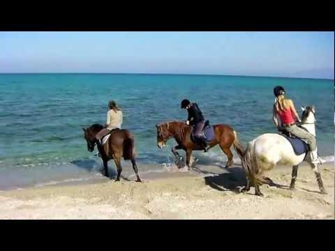 Koně a moře to nejde do kupy :D