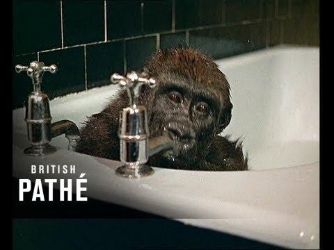 Beba gorila u kadi