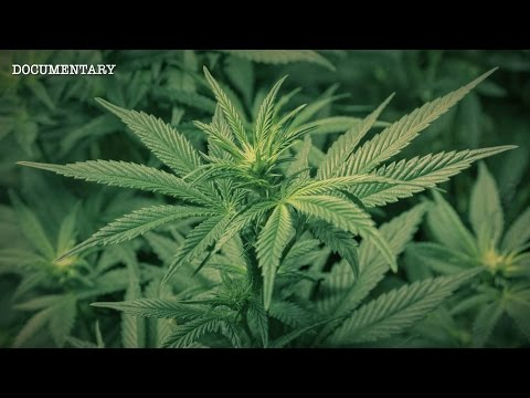 The Most Powerful Plant on Earth? The Hemp Conspiracy 2017 documentary movie, default video feature image, click play to watch stream online