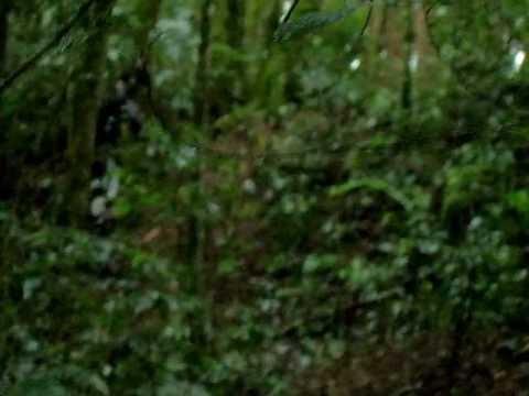 trilheiros porco do mato rio negro-pr