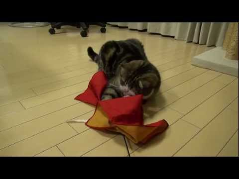 Maru the Cat