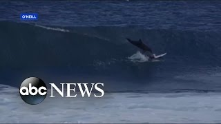 Teen Surfer Astonished After Being Hit by Leaping Dolphin - ABCNEWS