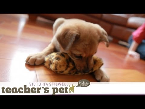 Teach a Puppy to Sit | Teacher's Pet With Victoria Stilwell