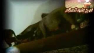 سفينه سيدنا نوح عليه السلام قصة اقدم وأشهر سفينة في التاريخ