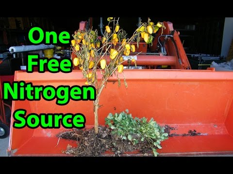 Video Response to MIgardener MYTH from MY Back to Eden No Till Gardening Method 101 with wood chips