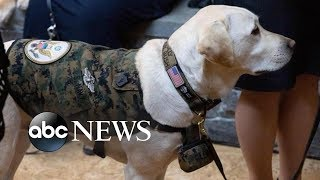 The latest on Sully the dog - ABCNEWS