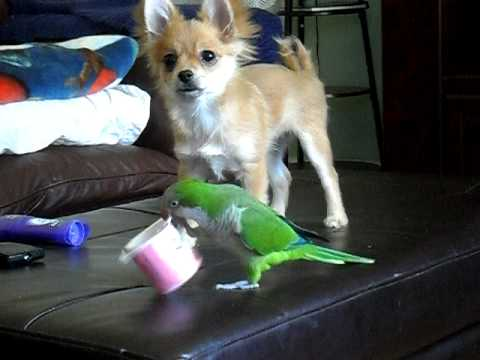 Parrot Vs. Puppy