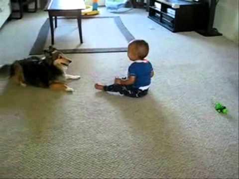 كلب يلاعب طفل