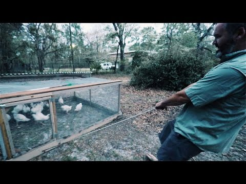 Moving Chickens (Without Running Them Over)