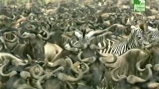Hayvanlar alemi obez hayvanlar belgeseli youtube en cok izlenen