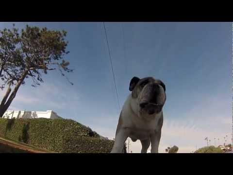 Flojd - pas koji voli skejtbord