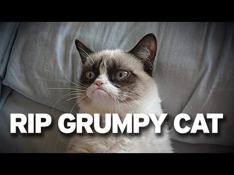 Grumpy Cat has Died. :(