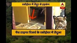 Leopard found inside kitchen in MP's Pench Tiger Reserve - ABPNEWSTV
