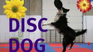 Indoor Disc Dog Playday