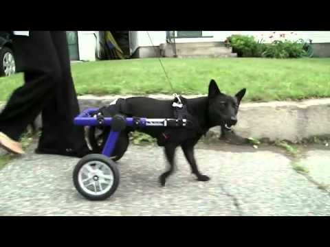 Inside Every Good Dog is A Great Dog - Purina® Pro Plan® Commercial - YouTube.flv